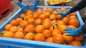 box-of-pumpkins